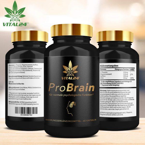 Pro_Brain_02